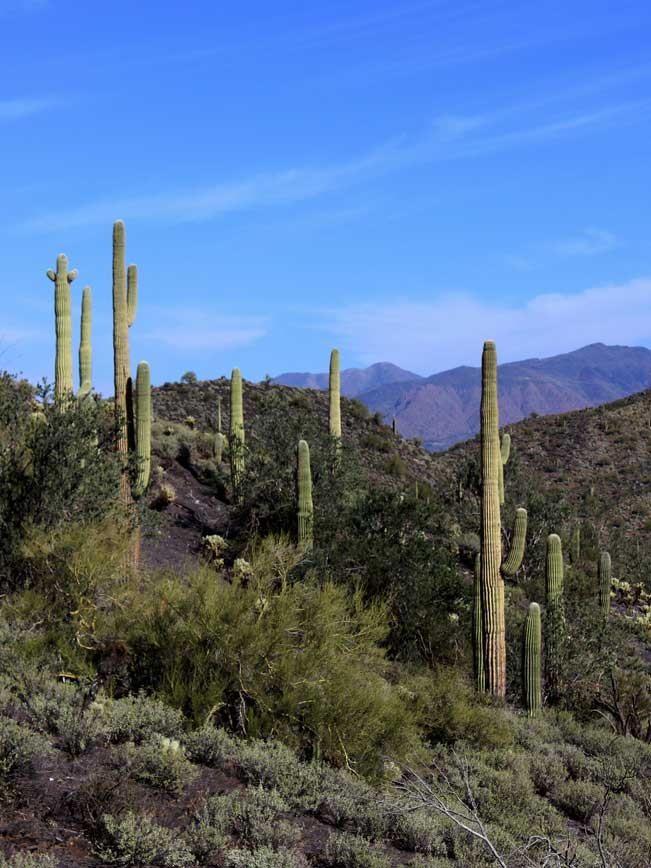 A landscape, Arizona, Phoenix North Valley, Mountain Range, Cave Creek Recreational Area, Quartz Hiking Trail