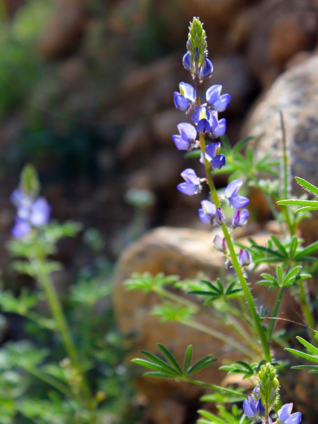 Desert Wildflower Season Arizona S Spring Colorfest