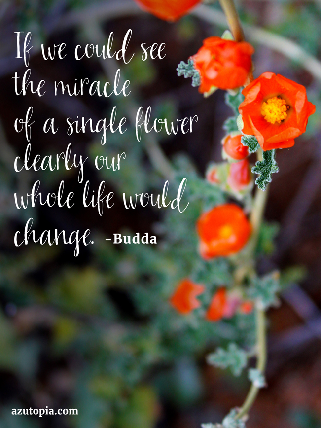 Inspiration, Desert Wildflower, Globmallow, Budda, Quote, Inspiration from Budda
