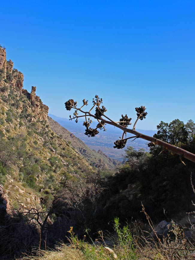 View, Tucson, Ventana Valley, Central Arizona, Ventana Canyon Hiking Trail, Santa Catalina Mountains, Century Plant