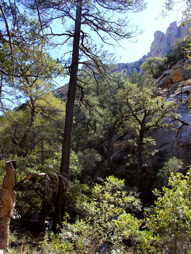 Landscape, View, Trees, Path, Central Arizona, Ventana Canyon Hiking Trail, Santa Catalina Mountains, Tucson, Canyons, Shade