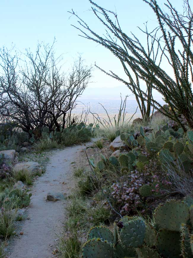 Landscape, View, Tucson, Cacti, Ocitillo, Central Arizona, Ventana Canyon Hiking Trail, Santa Catalina Mountains