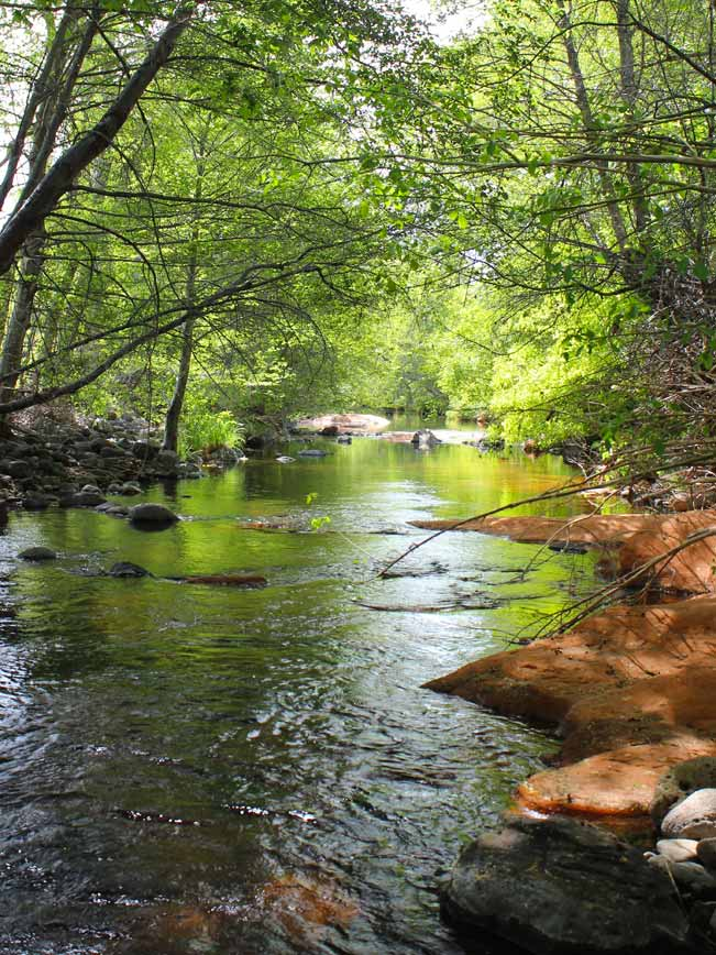 Wet Beaver Creek, Trees, Arizona, Bell Trail, Sedona
