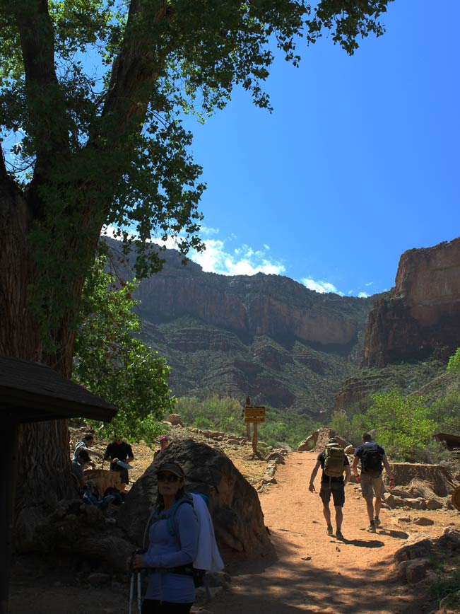 Landscape, Hikers, Resting, Shade, Trees, Refilling, Indian Garden, Arizona, Grand Canyon, Canyons, Bright Angel Hiking Trail