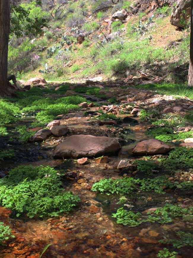 Indian Garden Steam, Indian Garden, Arizona, Grand Canyon, Bright Angel Hiking Trail