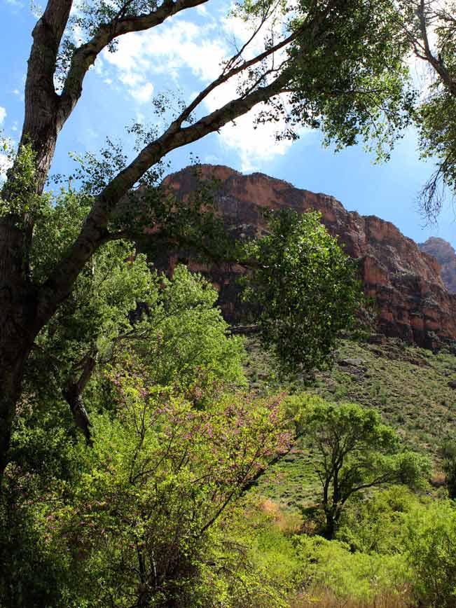 Landscape, Canyons, Trees,Indian Garden, Arizona, Grand Canyon, Bright Angel Hiking Trail