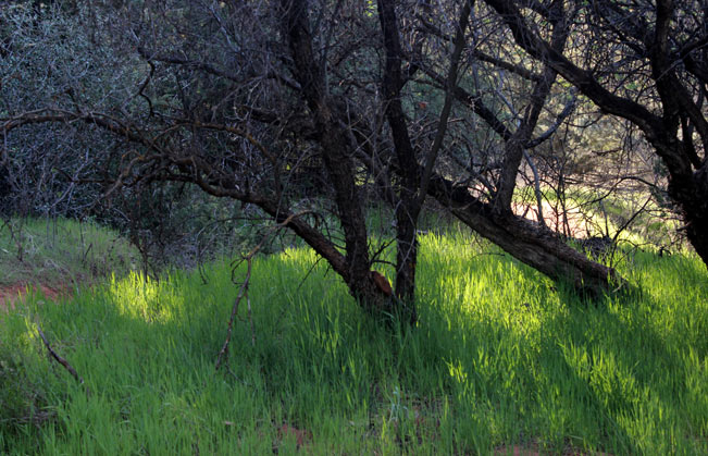 Landscape, Marsh, Green Grass, Sedona, Arizona, Oak Creek, Baldwin Loop Hiking Trail
