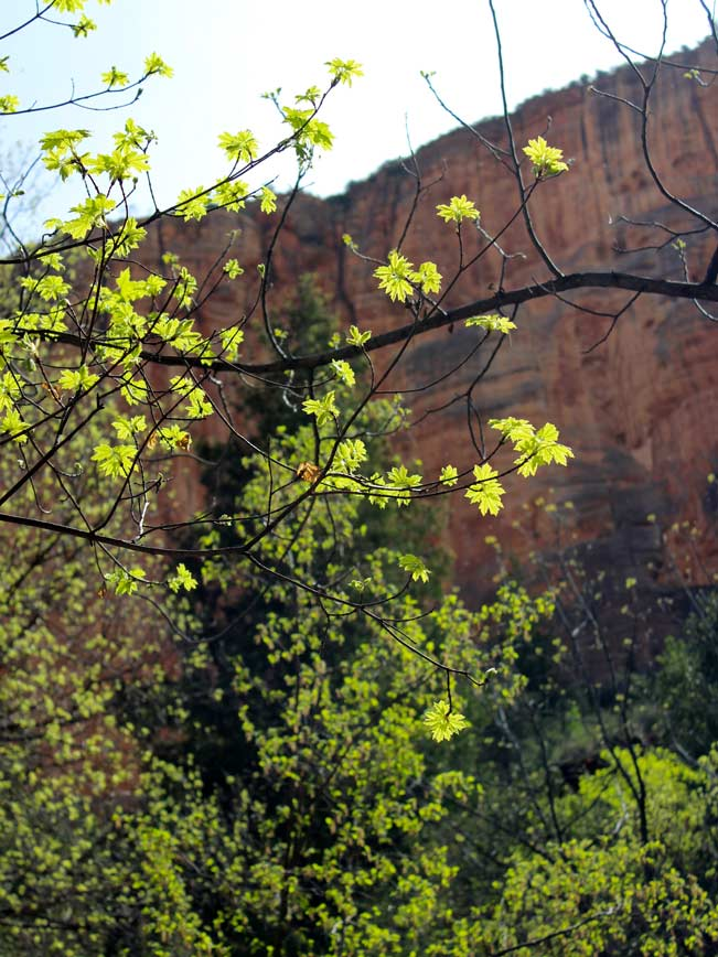 Sedona, Arizona, Boynton Canyon Hiking Trail, Trees, Inner Canyon Walls, Boynton Canyon