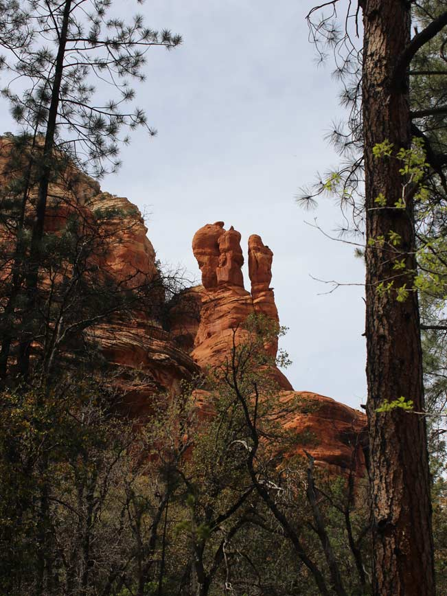 Sedona, Arizona, Boynton Canyon Hiking Trail, Pine Trees, Sculpted Inner Canyon Walls.