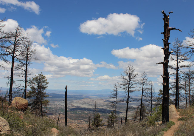 Landscape View, Chino Valley, Saddle, Crest, Prescott, Arizona, Granite Mountain Hiking Trail, Singed Trees