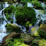 Spring, Water, Moss, Rocks, Payson, Arizona. Horton Spring, Horton Creek Hiking Trail, Mogollon Rim Hikes, AZ, Payson area