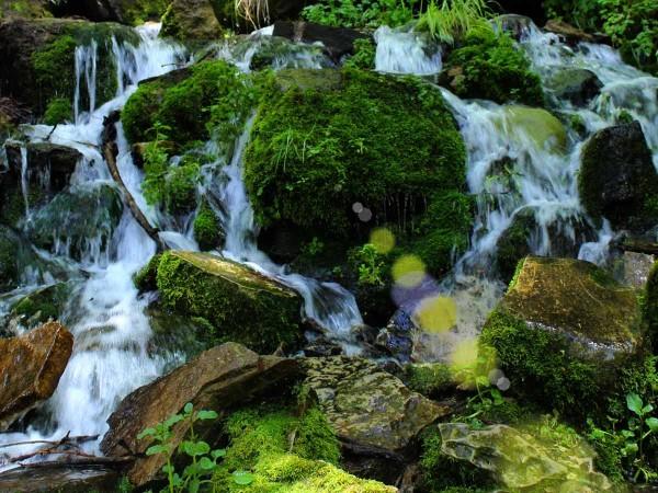 Spring, Water, Moss, Rocks, Payson, Arizona. Horton Spring, Horton Creek Hiking Trail