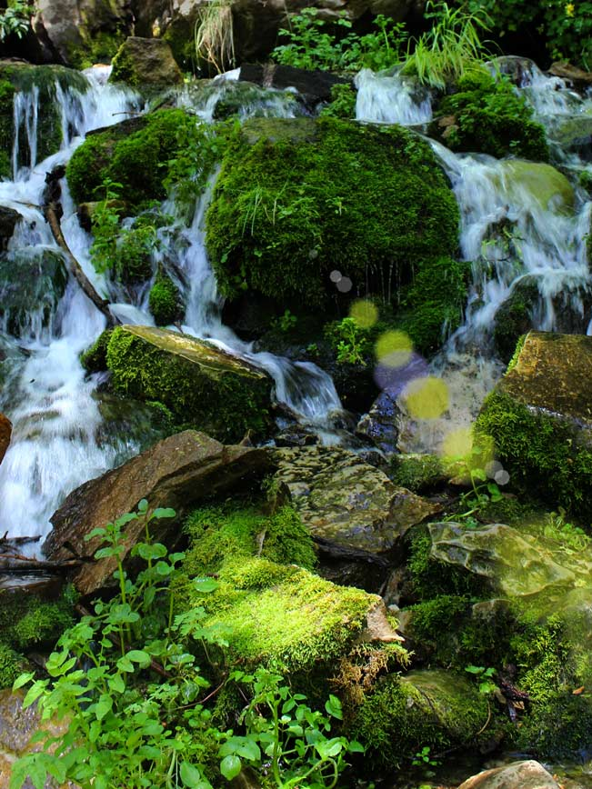 Spring, Water, Moss, Rocks, Payson, Arizona. Horton Spring, Horton Creek Trail