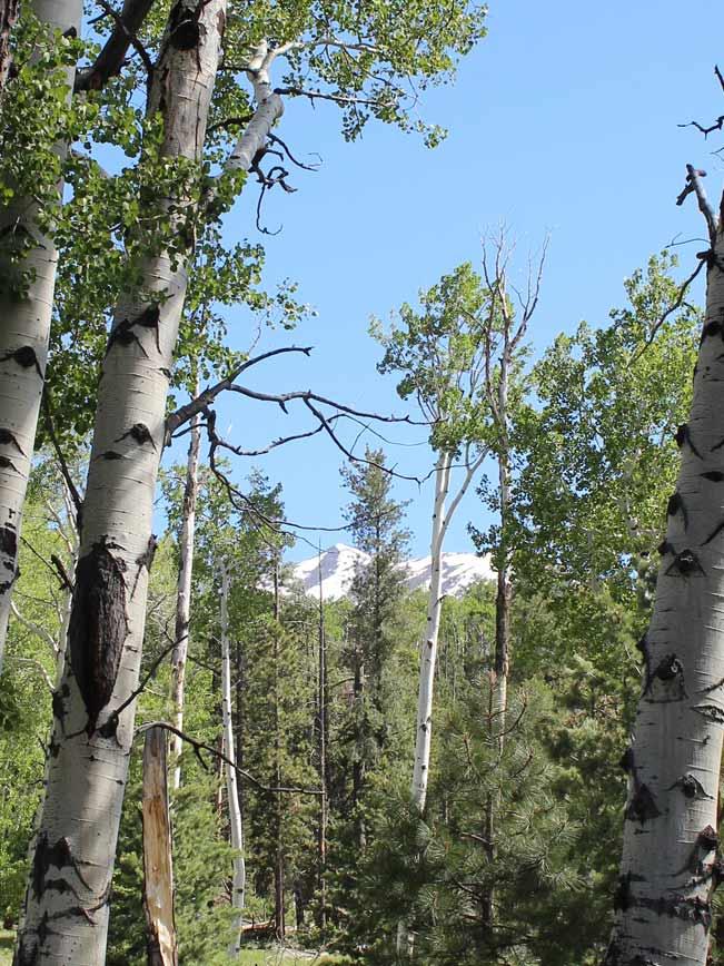 Landscape, View, Flagstaff, Arizona, Snow-Capped Peak, Mount Humphrey, Aspens, Bear Jaw Trail, Abineau Trail, Bear Jaw and Abineau Hiking Trail Loop