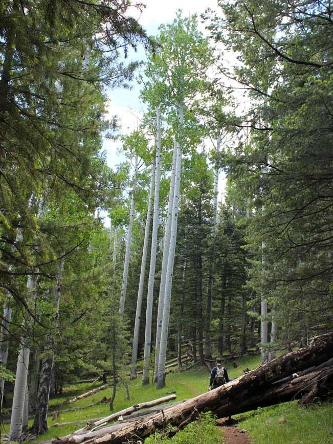 Landscape, Hiker, Flagstaff, Arizona, Bear Jaw Trail, Bear Jaw and Abineau Hiking Trail Loop, Aspens, Pines