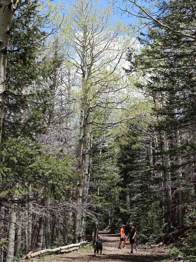Landscape, Hikers, Dog, Flagstaff, Arizona, Bear Jaw Trail, Abineau Trail, Pipeline Trail, Bear Jaw and Abineau Hiking Trail Loop