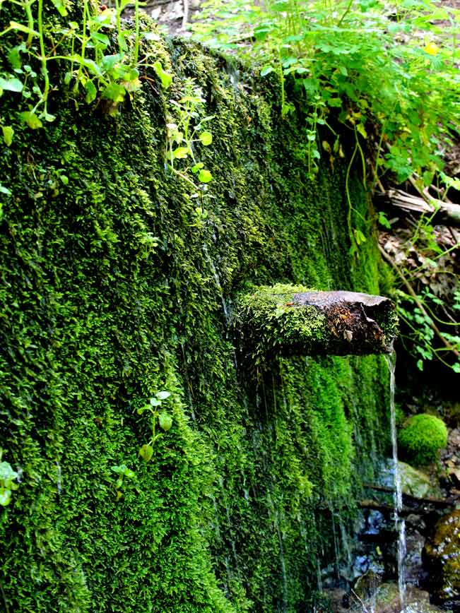 Water, Moss, Pipe, Payson, Arizona, Horton Spring, Horton Creek Trail