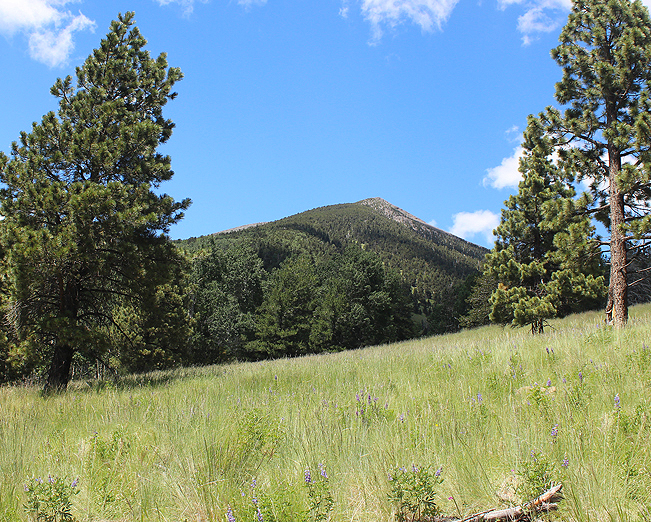 Landscape, Flagstaff, Arizona, Mount Humphreys, Wild Flowers, Field, Kachina Hiking Trail.