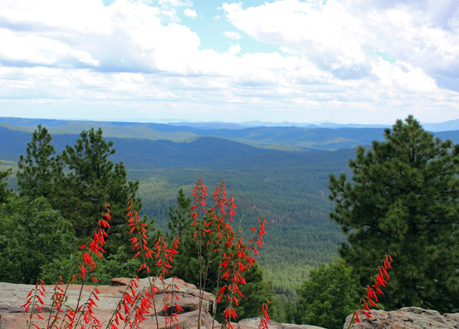 Landscape, View, Arizona Plateau, Red Flowers, Rim Lakes Vista Trail, Payson, Arizona, Mogollon, Rim Lakes Vista Hiking Trail Rim