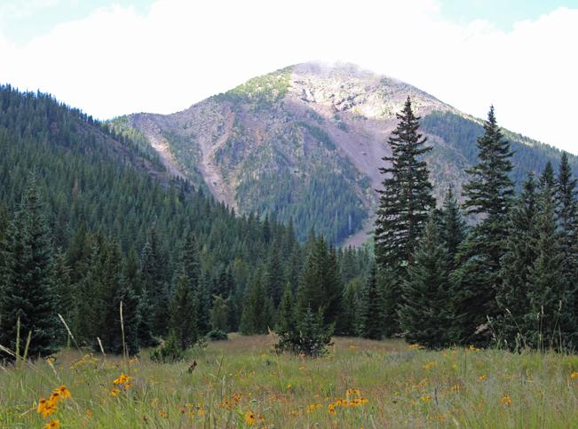 Landscape, Wildflowers, Inner Basin,Flagstaff, Arizona, San Francisco Mountains, Inner Basin Hiking Trail, Humphreys Peak