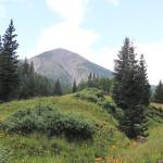 Landscape, Wildflowers, Inner Basin,Flagstaff, Arizona, San Francisco Mountains, Inner Basin Hiking Trail, Flagstaff Area, Hiking Flagstaff AZ, Arizona Hiking Trails Flagstaff