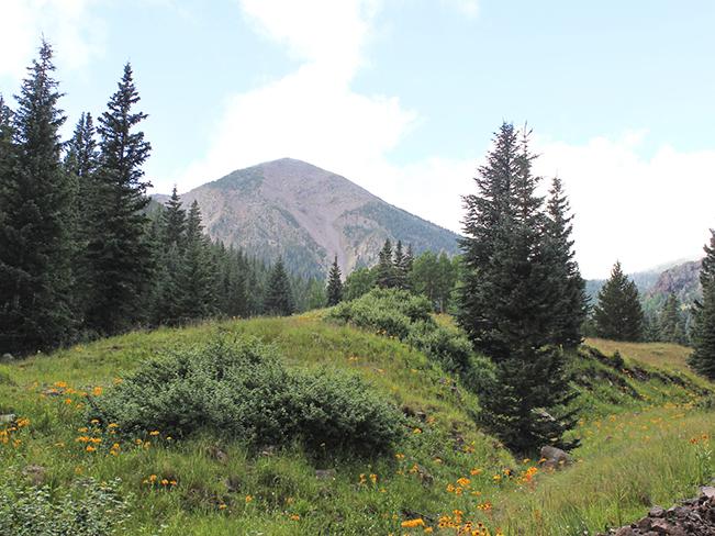 Landscape, Wildflowers, Inner Basin,Flagstaff, Arizona, San Francisco Mountains, Inner Basin Hiking Trail