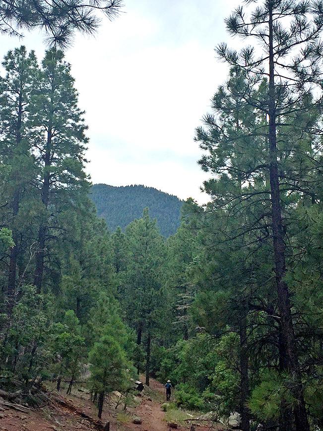 Landscape,Hiker, Bill Williams Hiking Trail, Pines, Williams, Arizona