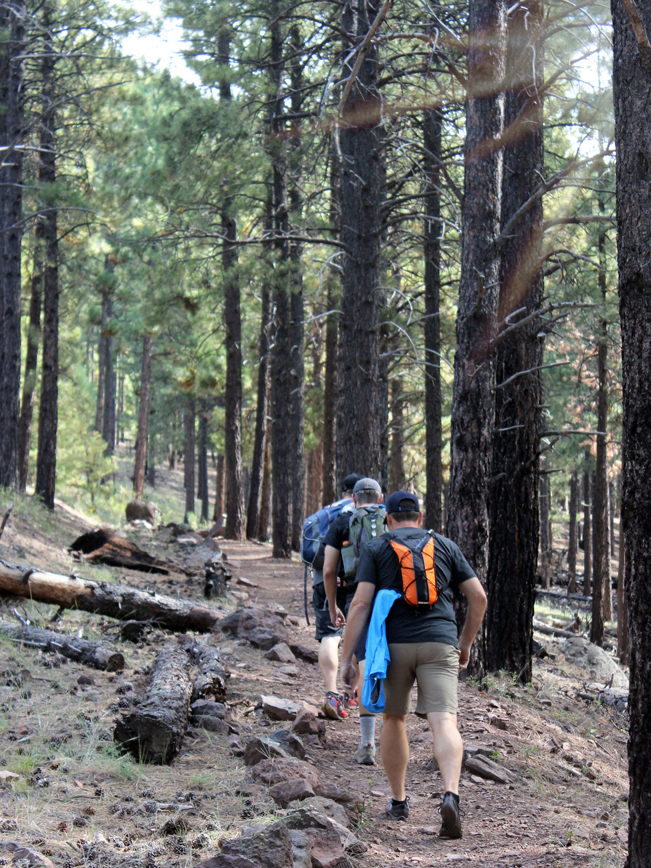 Landscape, Hikers, Kendrick Mountain Hiking Trail, Kendrick Mountain, Pines, Flagstaff, Arizona