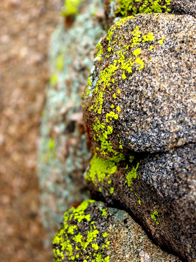 Close up image of Chartreuse, Green, Lichen, Boulder, Wind Cave Hiking Trail, Mesa, Arizona, Usery Park, Phoenix.
