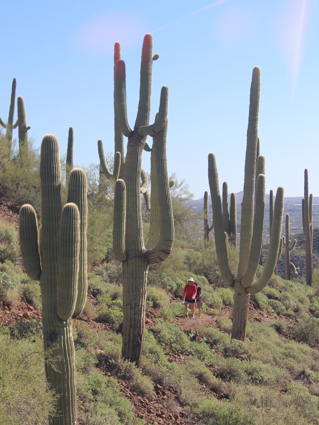 Landscape, View,Hikers, Saguaros, Cave Creek, Arizona, Elephant Mountain Hiking Trail, Spur Cross Ranch Conservation Area, Phoenix.