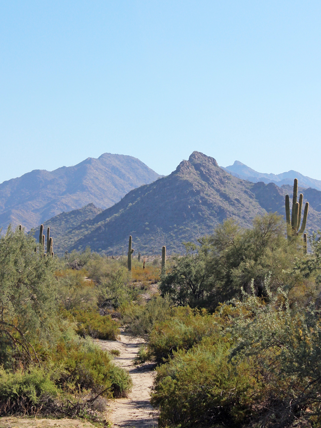 Landscape, View, Saguaros, Palo Verdes, Dessert, Arroyo, Purple Mountains, Goodyear, Arizona, Estrella Mountain Regional Park, Rainbow Valley and Toothaker Hiking Trail Loop, Phoenix