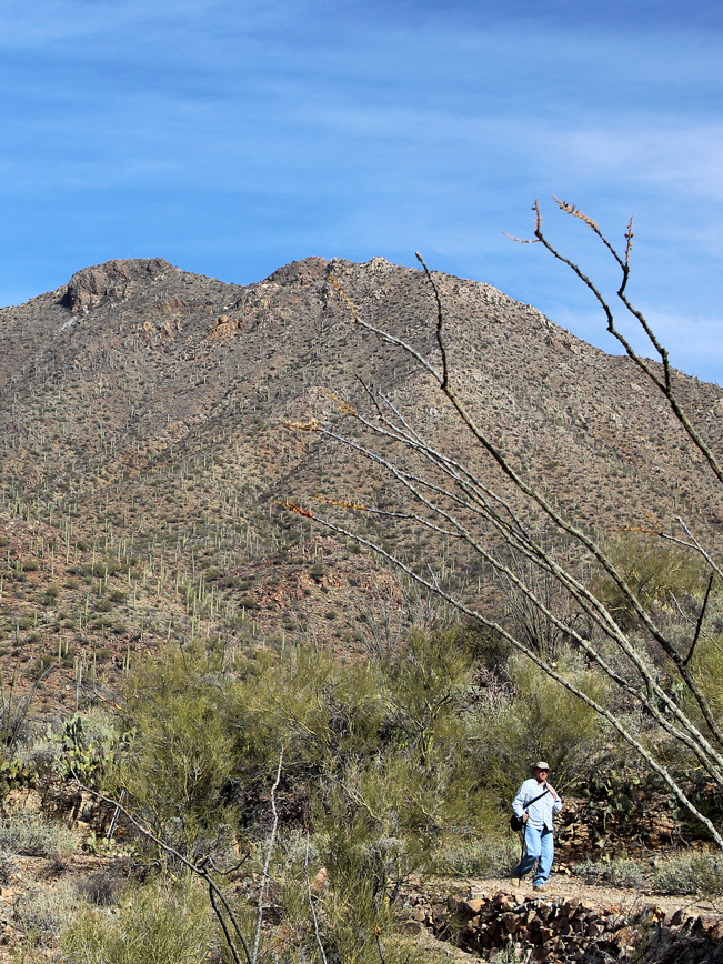 Hiker, base, King Canyon Hiking Trail, Wasson Peak, Landscape, Tucson Mountains, Tucson, Saguaro National Park