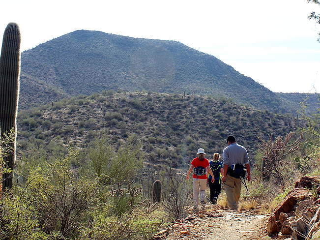 Landscape, Hikers, King Canyon Hiking Trail, Tucson Mountains, Foothills, Saguaro National Park, Tucson, Arizona