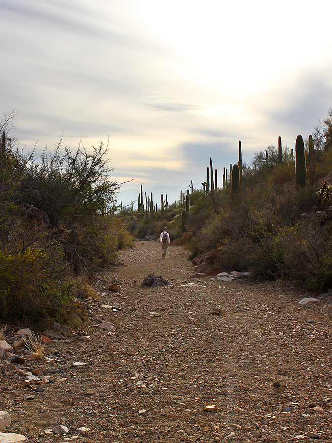 Hiker, wash, arroyo, King Canyon Hiking Trail, Saguaro National Park, Tucson Mountains, Tucson, Arizona