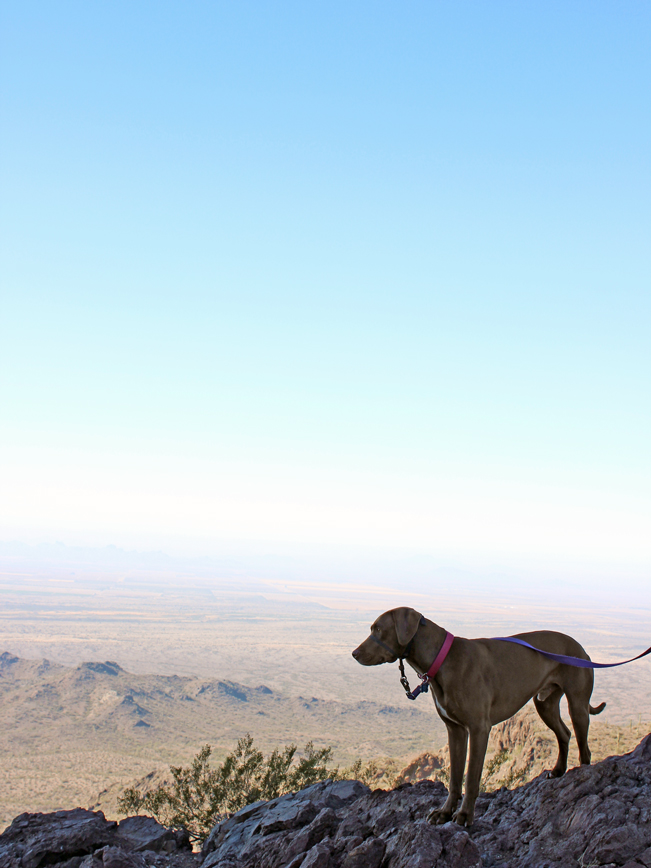 Landscape, Dog, Saddle, Picacho Peak, Tucson, Arizona, Hunter Hiking Trail to Picacho Peak, Expansive Views, Desert
