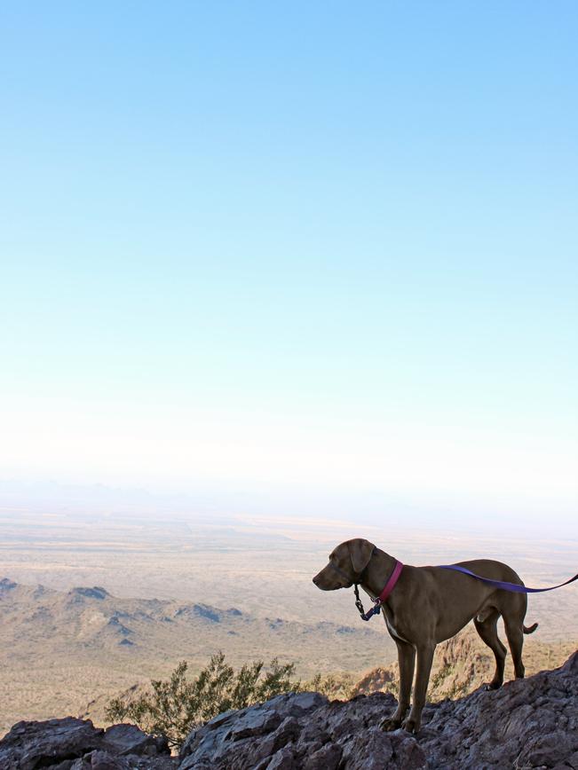 Landscape, Dog, Saddle, Picacho Peak, Tucson, Arizona, Hunter Hiking Trail to Picacho Peak, Expansive Views, Desert