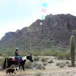 Landscape, View, Horse, Horseback Rider, Dog, Malpais Mountains, San Tan Regional Park, Queen Creek, Arizona, San Tan Hiking Trail Loop, Phoenix Area, Phoenix Area Hiking Trails, Arizona Hiking Trails Phoenix
