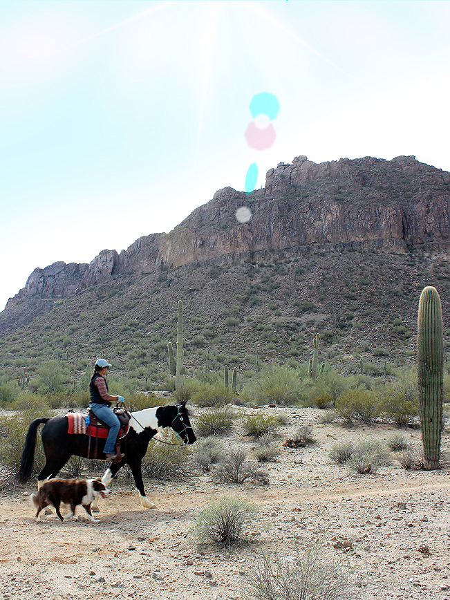 Landscape, View, Horse, Horseback Rider, Dog, Malpais Mountains, San Tan Regional Park, Queen Creek, Arizona, San Tan Hiking Trail Loop, Phoenix Area