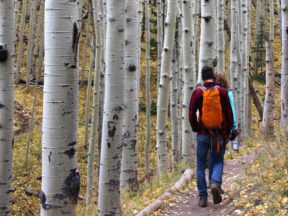 Hikers, Backpack, Flagstaff, ARizona,, Inner Basin Hiking Trail, Aspens. AZ Utopia, What to Take on a HIke