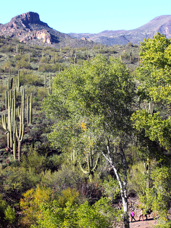 Landscape, View, Hikers, Trees, Jewel of the Creek Hiking Trail, Jewel of the Creek Preserve, Cave Creek, Arizona, Phoenix Area, Elephant Mountain, Spur Cross Conservation Area, Family Hikes