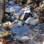 Stones, Creek, Bog & Kent Springs Hiking Trail Loop, Madera Canyon, Santa Rita Mountains,, Tucson, Arizona, Tucson Area
