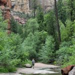 Landscape, View, Female, Hike, Oak Creek, Sedona, Arizona. West Fork Hiking Trail, Cliffs, Easy hikes, Pet Friendly Hikes, Sedona Area Hikes A close up view of a wild flower along the shores of West Clear Creek off of the Maxwell Hiking Trail, outside of Flagstaff and Strawberry, Arizona, with the creek and reeds behind them. Moderate Arizona hiking trails. Flagstaff area hiking trails. Arizona hiking trails with water. Copyright AZUtopia. No use without permission.