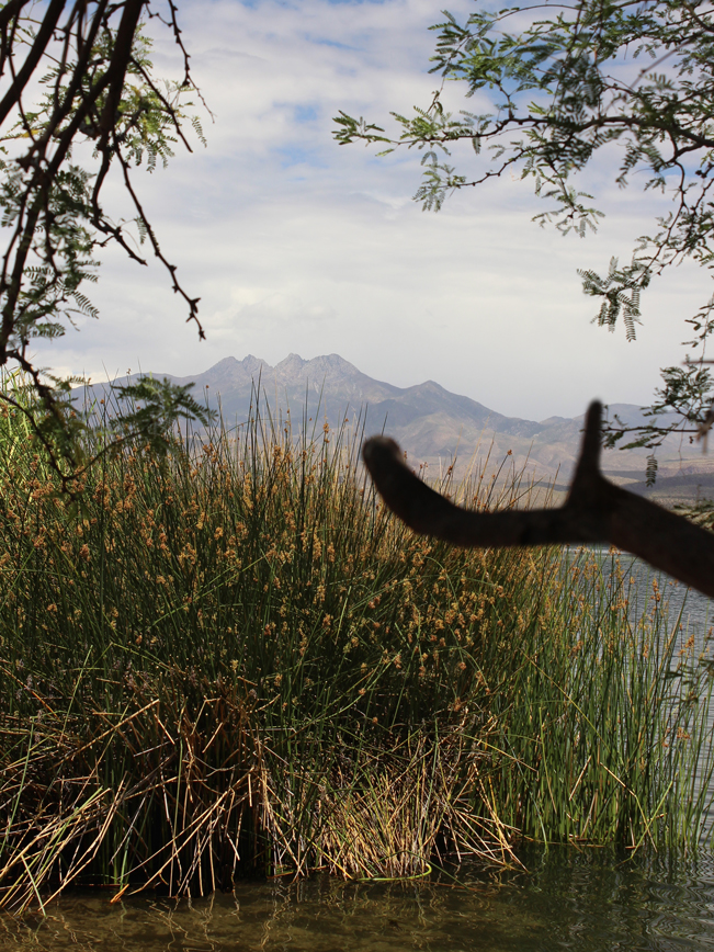 Landscape, View, Saguaro Lake, Arizona, Four Peaks Mountain, Matzazals, Reeds, Butcher Jones Hiking Trail, Moderate Hikes. Phoenix Area Hikes, Family Friendly Hikes, Pet Friendly Hikes