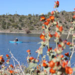 Wild Burro Hiking Trail; Wild Flowers; Kayak; Globemallow; Lake Pleasant; Phoenix; Arizona; Phoenix Area Hikes; Easy Hikes; Views; Lake; Copyright azutopia.com; No use without permission