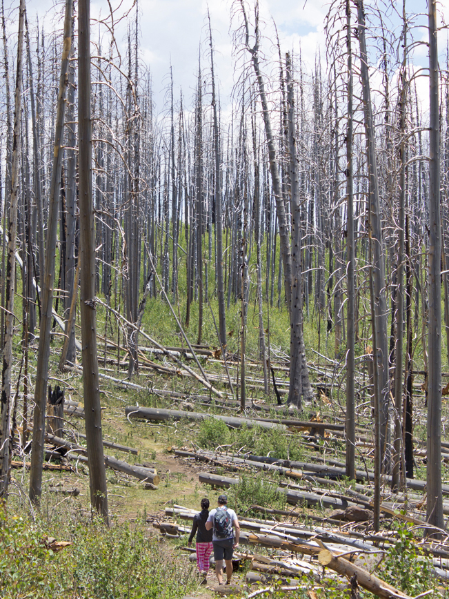 Hikers; Escudillo Hiking Trail; Apache Sitgreaves National Forest; Fire Damage; Forest; Alpine; Arizona; Moderate Hiking Trails; Pet Friendly Hiking Trails. Copyright azutopia.com. No use without permission.