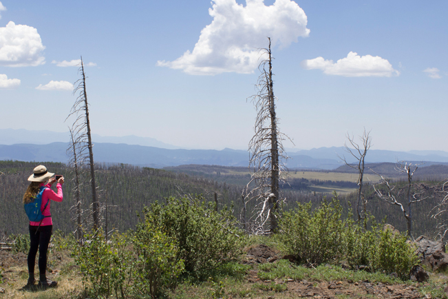Hiker; Escudillo Hiking Trail; Apache Sitgreaves National Forest; Fire Damage; Peak; Watchtower; Alpine; Arizona; Moderate Hiking Trails; Pet Friendly Hiking Trails. Copyright azutopia.com. No use without permission.