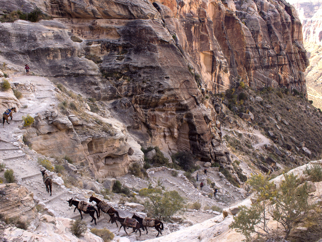 Hikers; Mules; Havasu Falls Hiking Trail; Hualapi Hilltop; Hualapi Canyon; Switchbacks; Canyon; Dessert; Havasupai Falls; Havasupai; Supai; Arizona; Northern Arizona; Northern Arizona Hikes; Difficult Hikes; Copyright azutopia.com. No use without permission