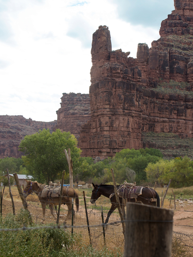 Mules; Horses; Suapi Reservation; Supai; Havasu Canyon; Havasu Falls Hiking Trail; Northern Arizona; Arizona; View; Canyon; Havasupai; Arizona; Northern Arizona Hikes; Difficult Hikes; Copyright azutopia.com. No use without permission