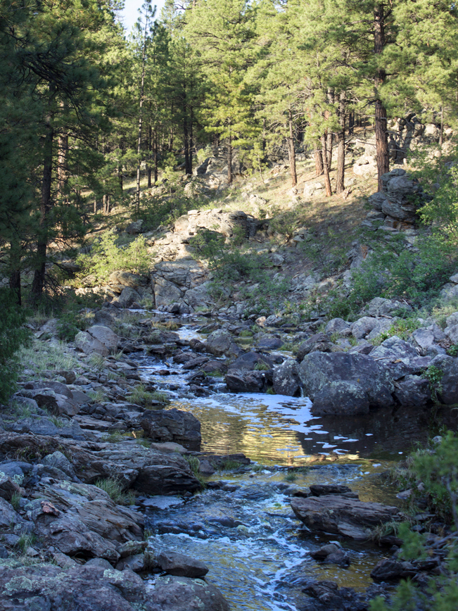 Sycamore Rim Loop Trail; Hiking Trail; Northern Arizona Hiking Trail; Williams; Arizona; Sycamore Creek; Babbling Creek; Pine Trees; Easy Hiking Trails; Pet Friendly Hiking Trails; Family Friendly Hiking Trails; Copyright azutopia.com. No use without permission.