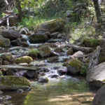 Stream; Babbling Brook; Rocks; Moss; Ferns; Grass; Forest; Greenery; See Canyon Hiking Trail; See Spring Hiking Trail, Payson; Arizona; Mogollon Rim; Moderate Hiking Trails; Pet Friendly HIking Trails; Central Arizona; Copyright azutopia.com; No use without permission.